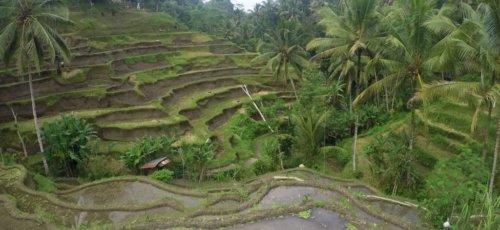 Wild Side: Indonesien: Urlaub vom Urlaub