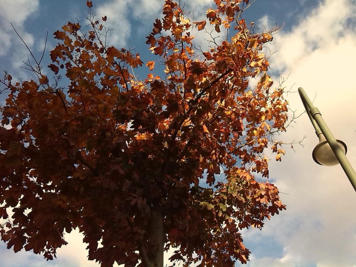 Herbst © f1rstlife / Sabrina Stock