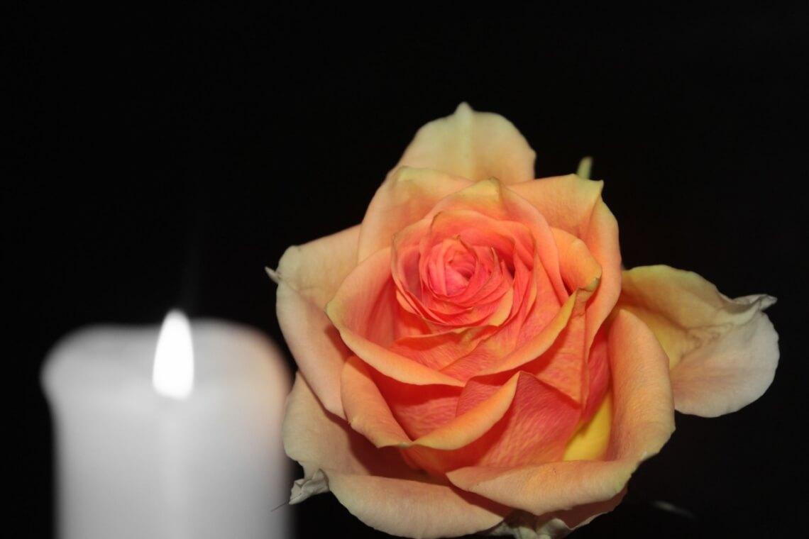 rose-1273733