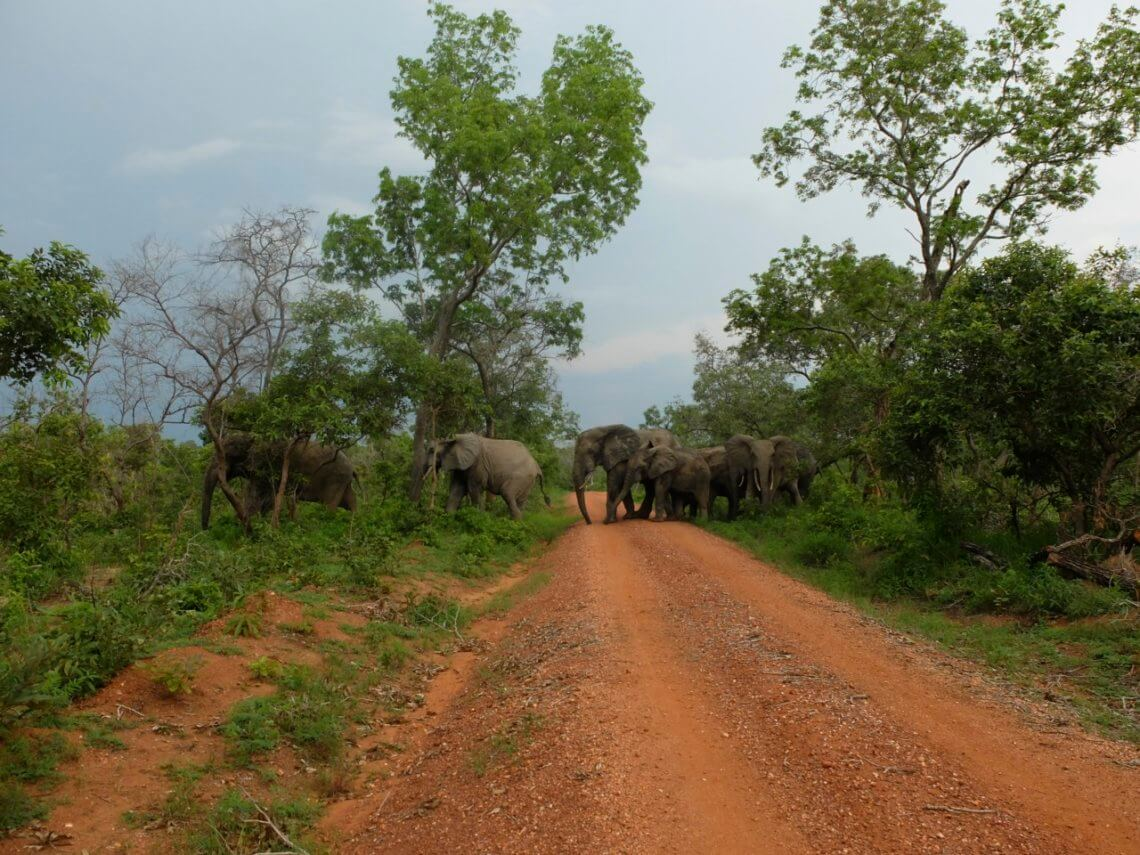 Elephants crossing the street at Mole National Park. © f1rstlife / Sabrina Wideburg