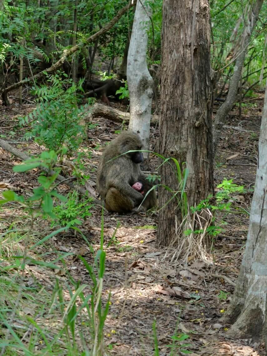 monkey-baby-shai-hills